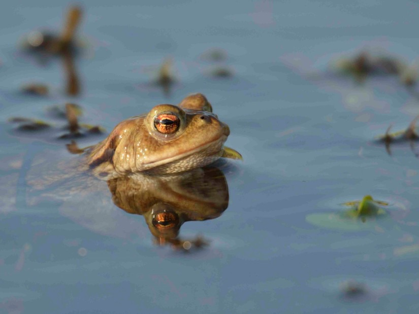 frog-5bbbc3e04f9c2.jpg