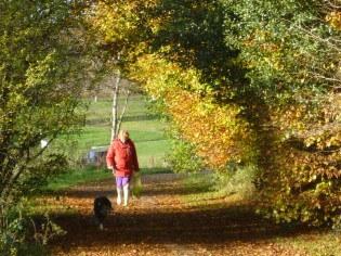 pyf_autumn-5ba009ef5c7db.jpg