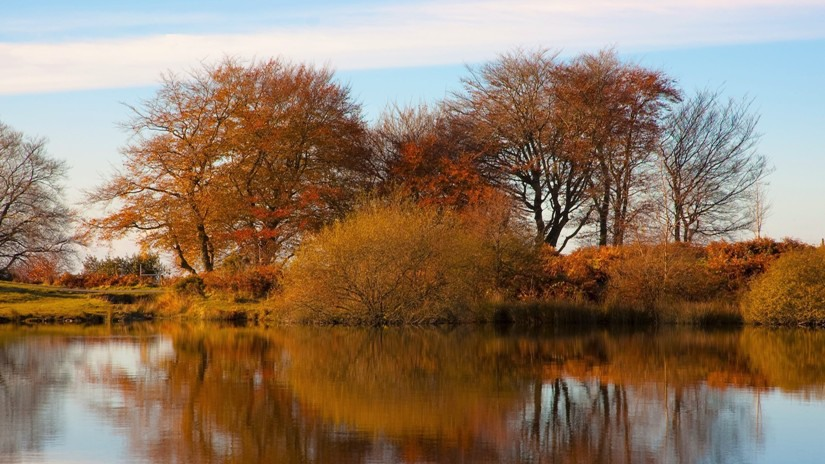 The reflection of autumn leaves in Pen-y-Fan Pond