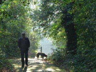ystrad-dog-walker-5bbe75e6aff10.jpg